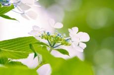 flower1034