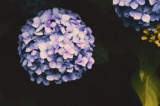 flower1037-2