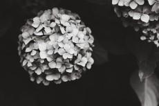 flower1037-3