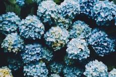 flower1038