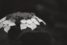 flower1039-3