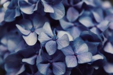 flower1040-2