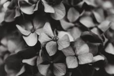 flower1040-3