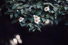 flower1042-2