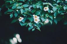 flower1042