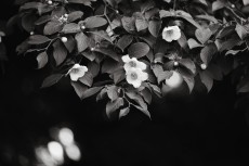 flower1042-3