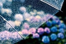 flower1043-2