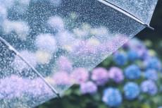 flower1043