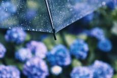 flower1044-2