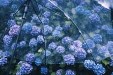 flower1045-2