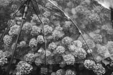 flower1045-3