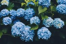 flower1046-2