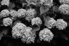 flower1046-3