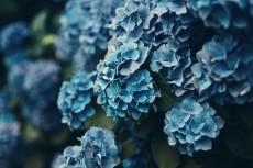 flower1047-2