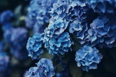 flower1047