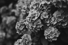 flower1047-3