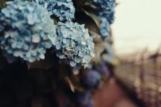 flower1048-2