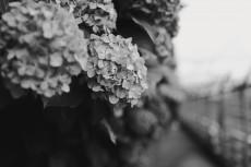flower1048-3