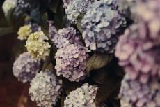 flower1049-2