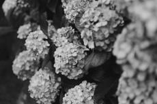 flower1049-3