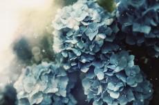 flower1050-2