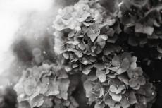 flower1050-3