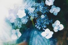 flower1051