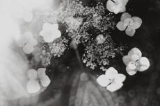 flower1051-3