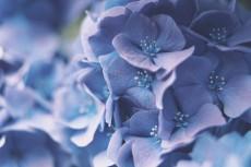 flower1052-2