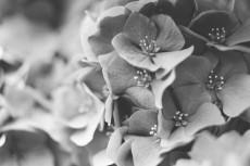 flower1052-3