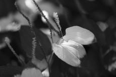 flower1056-3