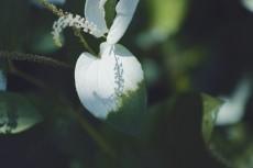 flower1057-2