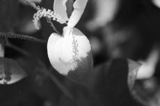flower1057-3