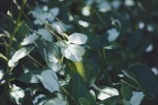 flower1058-2