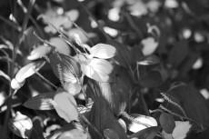 flower1058-3