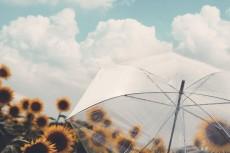 flower1062-2