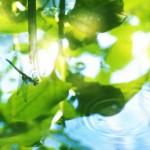 【高解像度】水に映るトンボと半夏生(ハンゲショウ)(3パターン)