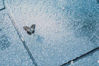 【高解像度】石畳と蝶(3パターン)