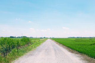 【高解像度】真っすぐな畦道(3パターン)