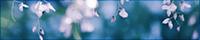 白い藤のバナー台