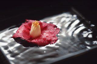 【高解像度】水に浮かぶ赤い椿(ツバキ)(3パターン)