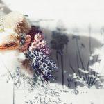 【高解像度】植物図と花束(9パターン)
