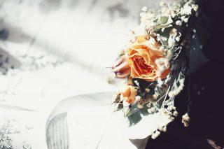 【高解像度】植物図と黄色い薔薇(バラ)(3パターン)
