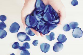 【高解像度】手から溢れる青い薔薇の花弁(バラ)(6パターン)
