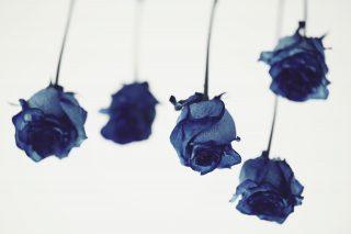 【高解像度】逆さの青い薔薇(バラ)(9パターン)