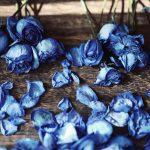 【高解像度】青い薔薇のドライフラワー(バラ)(3パターン)