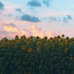後ろ向きの向日葵と空(3パターン)